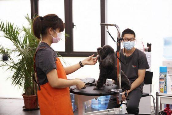 Du học nghề tại Hàn Quốc học chăm sóc thú cưng