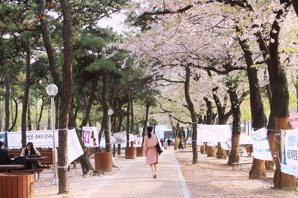 Mùa xuân thơ mộng trong khuôn viên trường INHA