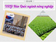 xkld-han-quoc-2019