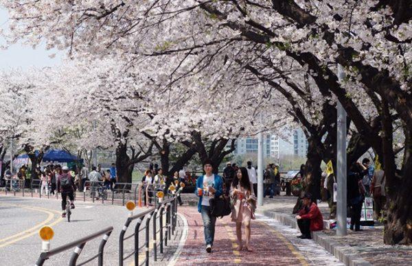 Đến Hàn Quốc trong dịp tết bạn sẽ được ngắm nhiều cảnh đẹp, được đi chơi thoải mái mà không phải lo việc cơm nước