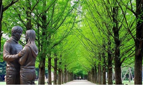 Du lịch Hàn Quốc mùa xuân tại Nami để tận hưởng sự ngập tràn của tình yêu đôi lứa