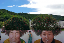 Phát sốt với hòn đảo phủ ngập sắc tím ở Hàn Quốc
