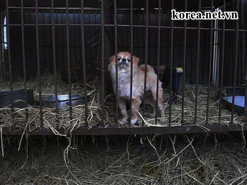 Chính phủ Hàn Quốc đã ra lệnh cấm thịt chó