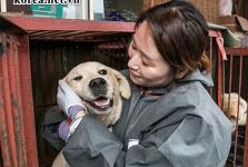 Vì sao Thịt Chó Ở Hàn Quốc nổi tiếng thế giới?
