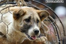 Tiết lộ 03 Lý do khiến ngành công nghiệp Thịt Chó Ở Hàn Quốc dần bị xóa sổ