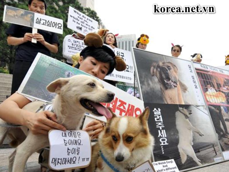 Cập nhật tình hình hot nhất về Hàn Quốc Biểu Tình Thịt Chó